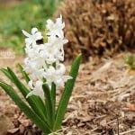 Spring 18/30 - White