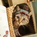 14_catsinhats_03_ul