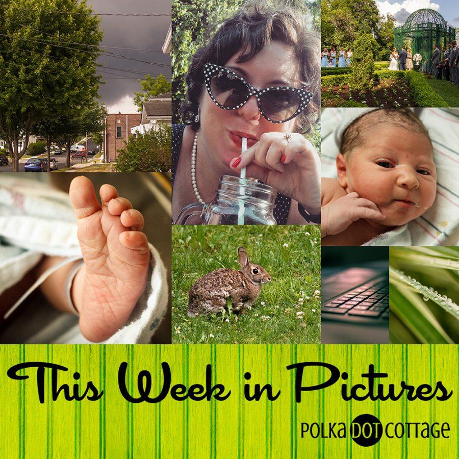 This Week in Pictures, Week 23, 2015