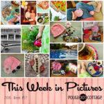 This Week in Pictures, Week 22, 2016