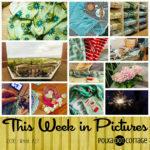 This Week in Pictures, Week 27, 2016