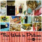 This Week in Pictures, Week 34, 2016