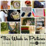 This Week in Pictures, Week 36, 2016