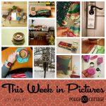 This Week in Pictures, Week 7, 2017