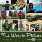 This Week in Pictures, Week 19, 2017
