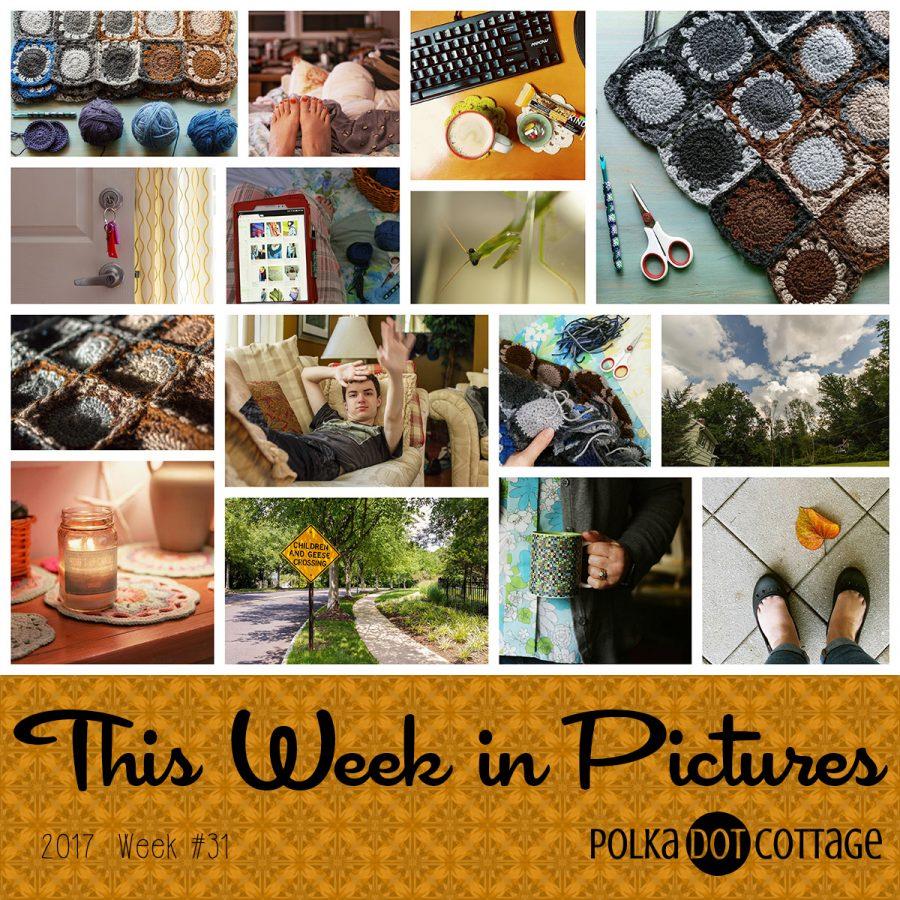 This Week in Pictures, Week 31, 2017