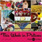 This Week in Pictures, Week 38, 2017