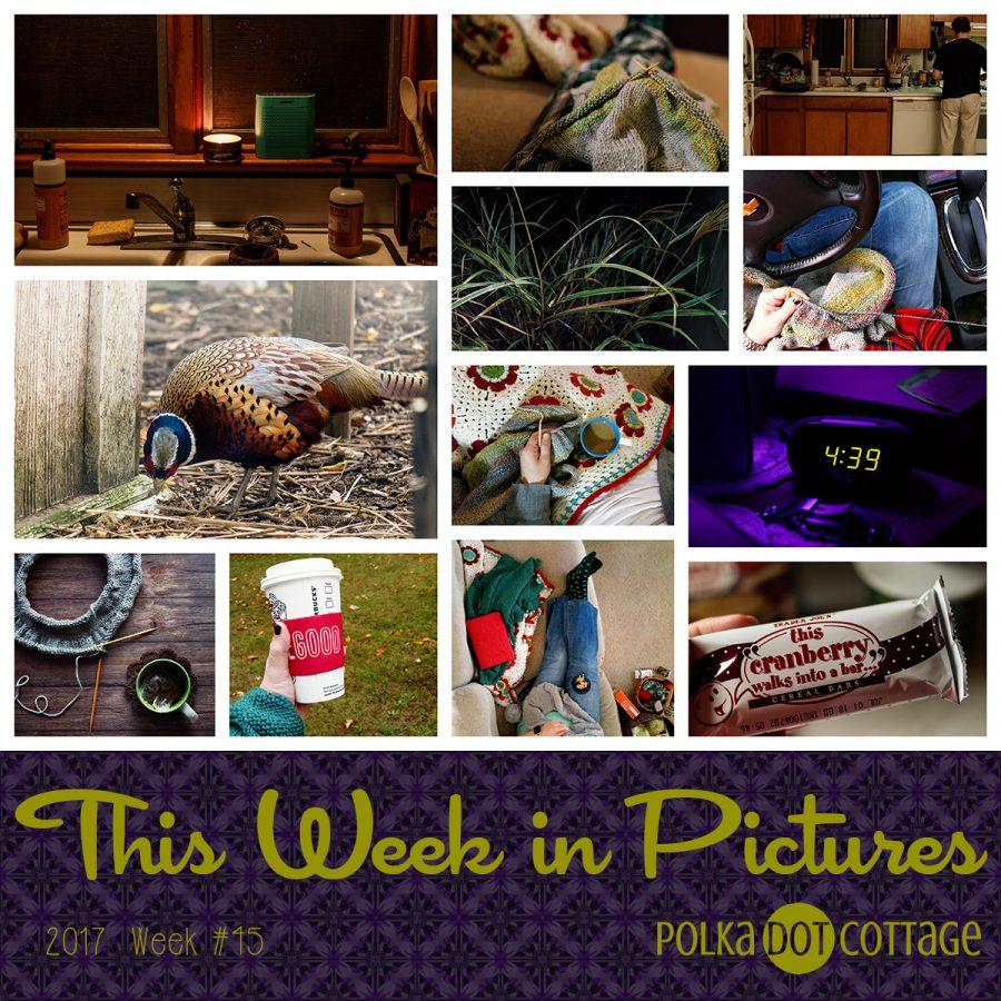 This Week in Pictures, Week 45, 2017