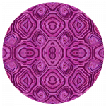 Pink Tortoise