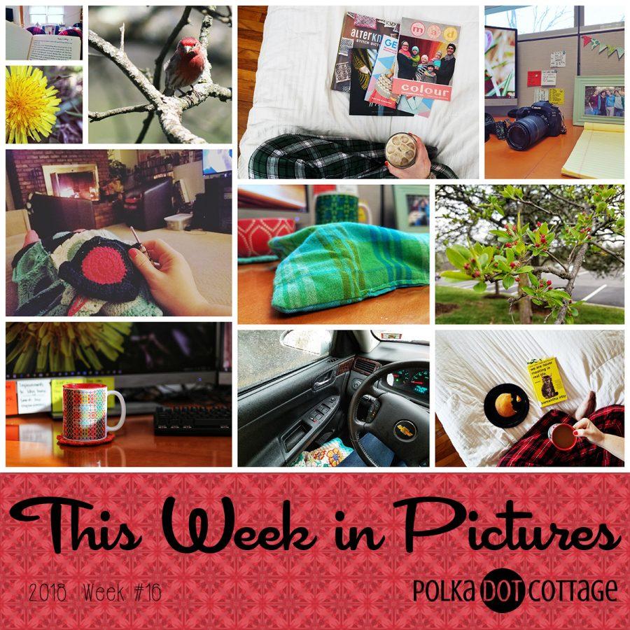 This Week in Pictures, Week 16, 2018