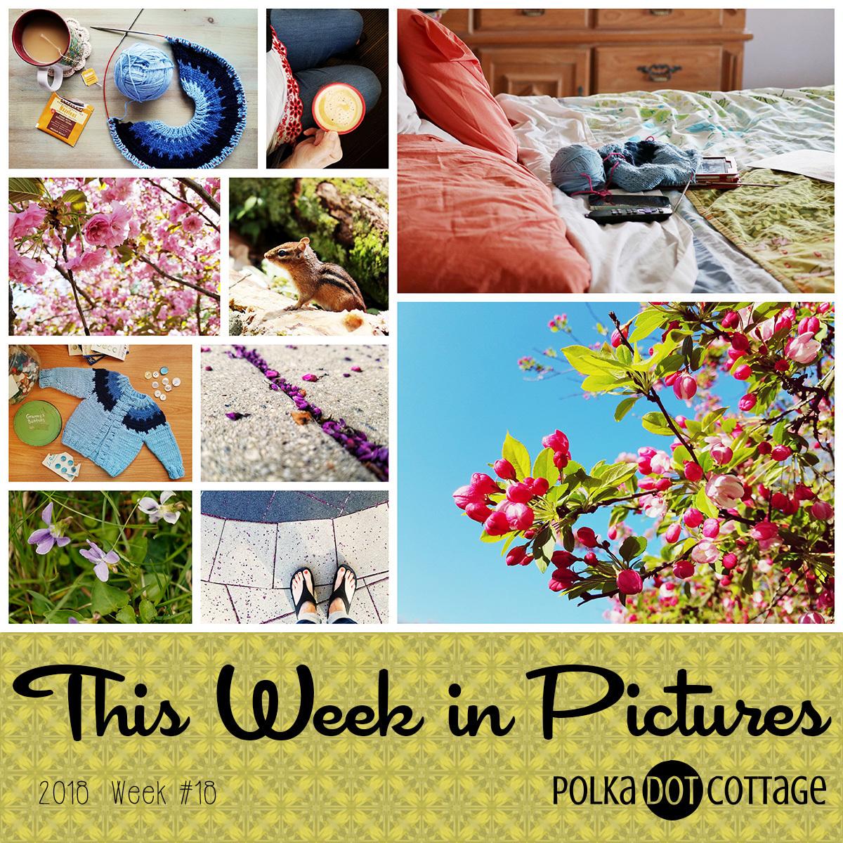 This Week in Pictures, Week 18, 2018
