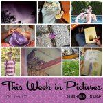 This Week in Pictures, Week 24, 2018