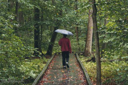 Great Swamp Wildlife Refuge walking in the rain