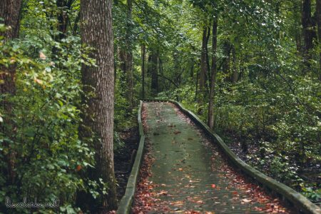 Great Swamp Wildlife Refuge boardwalk path
