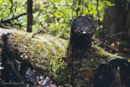 Great Swamp Wildlife Refuge fallen tree