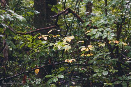 Great Swamp Wildlife Refuge yellow leaves