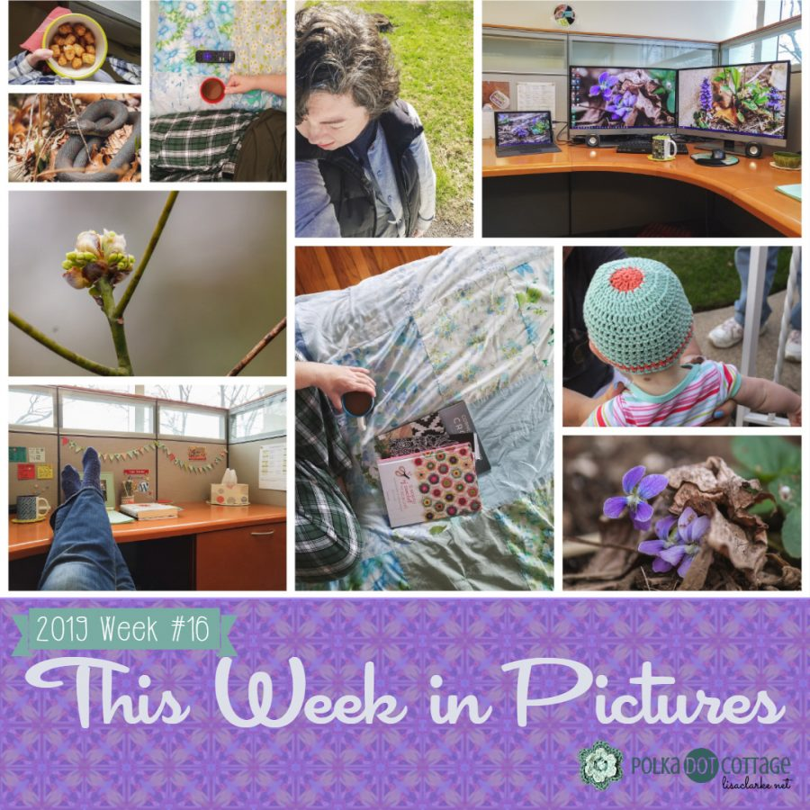 This Week in Pictures, Week 16, 2019