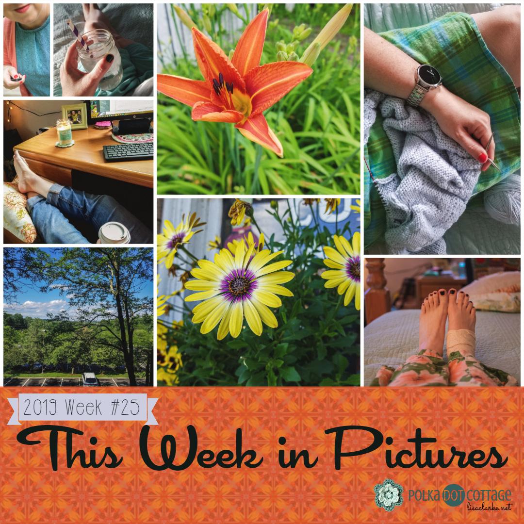This Week in Pictures, Week 25, 2019