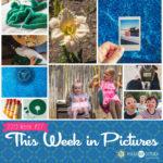 This Week in Pictures, Week 27, 2019