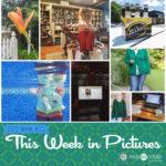 This Week in Pictures, Week 29, 2019