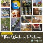 This Week in Pictures, Week 30, 2019
