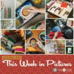 This Week in Pictures, Week 36, 2019