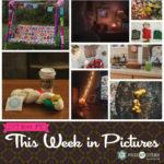 This Week in Pictures, Week 42, 2019