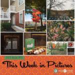 This Week in Pictures, Week 43, 2019