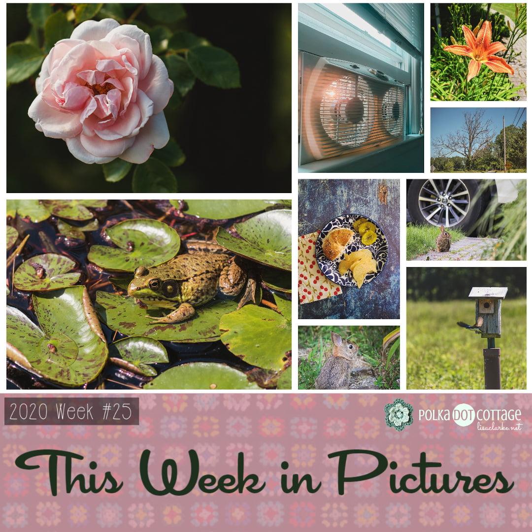 This Week in Pictures, Week 25, 2020