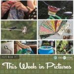 This Week in Pictures, Week 29, 2020
