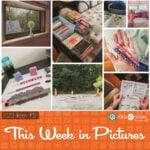 This Week in Pictures, Week 32, 2020