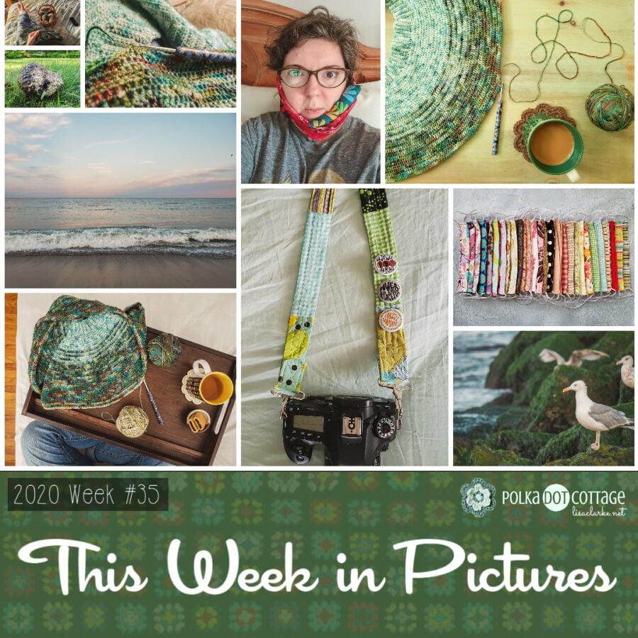 This Week in Pictures, Week 35, 2020