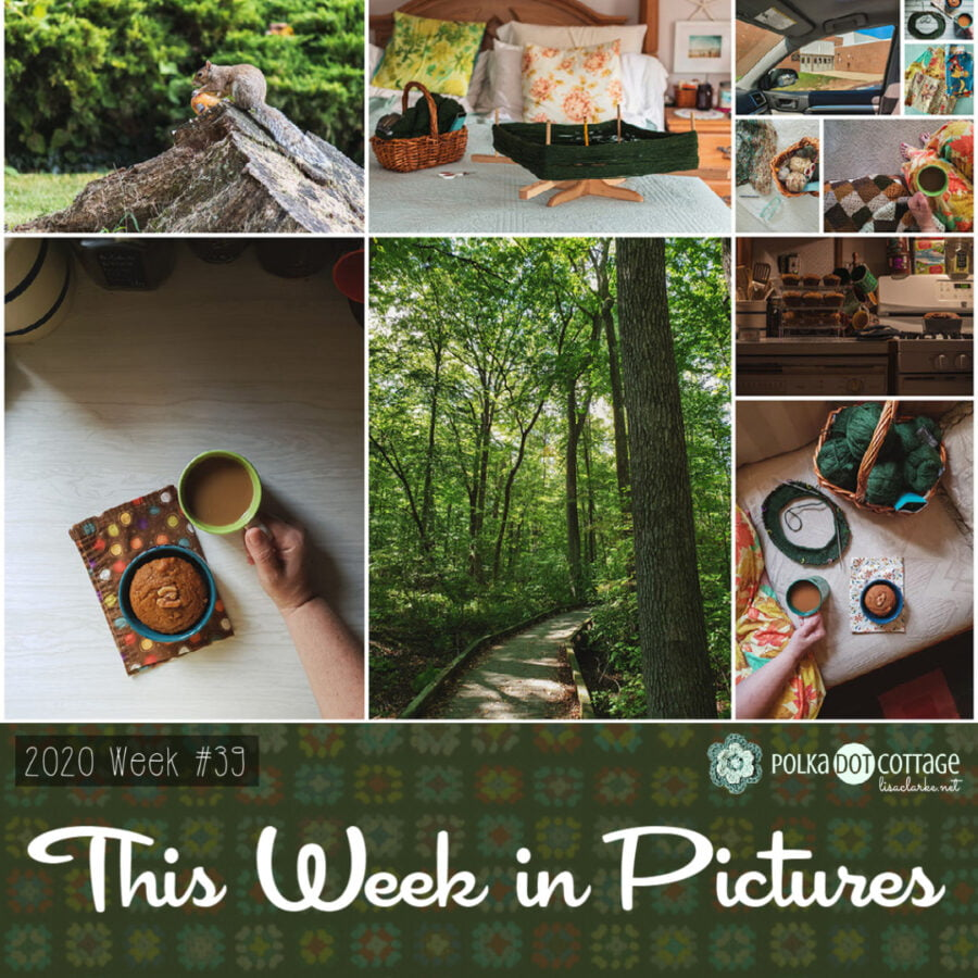 This Week In Pictures, Week 39, 2020