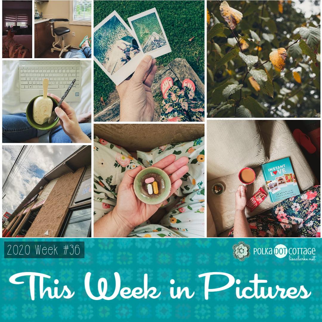 This Week in Pictures, Week 36, 2020