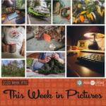 This Week in Pictures, Week 40, 2020