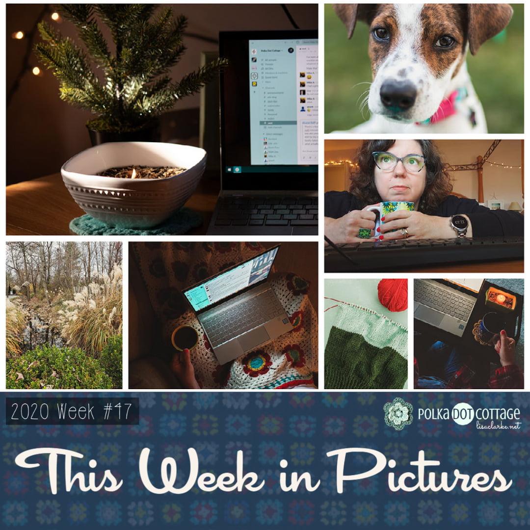 This Week in Pictures, Week 47, 2020
