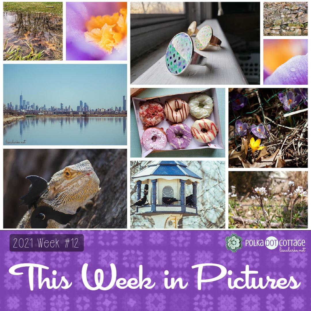 This Week in Pictures, Week 12, 2021