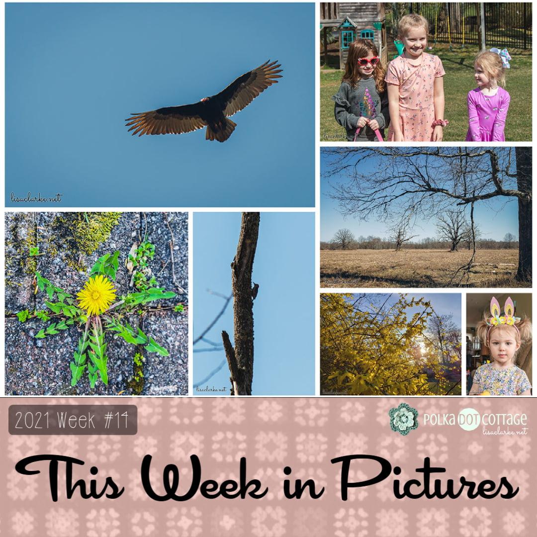 This Week in Pictures, Week 14, 2021