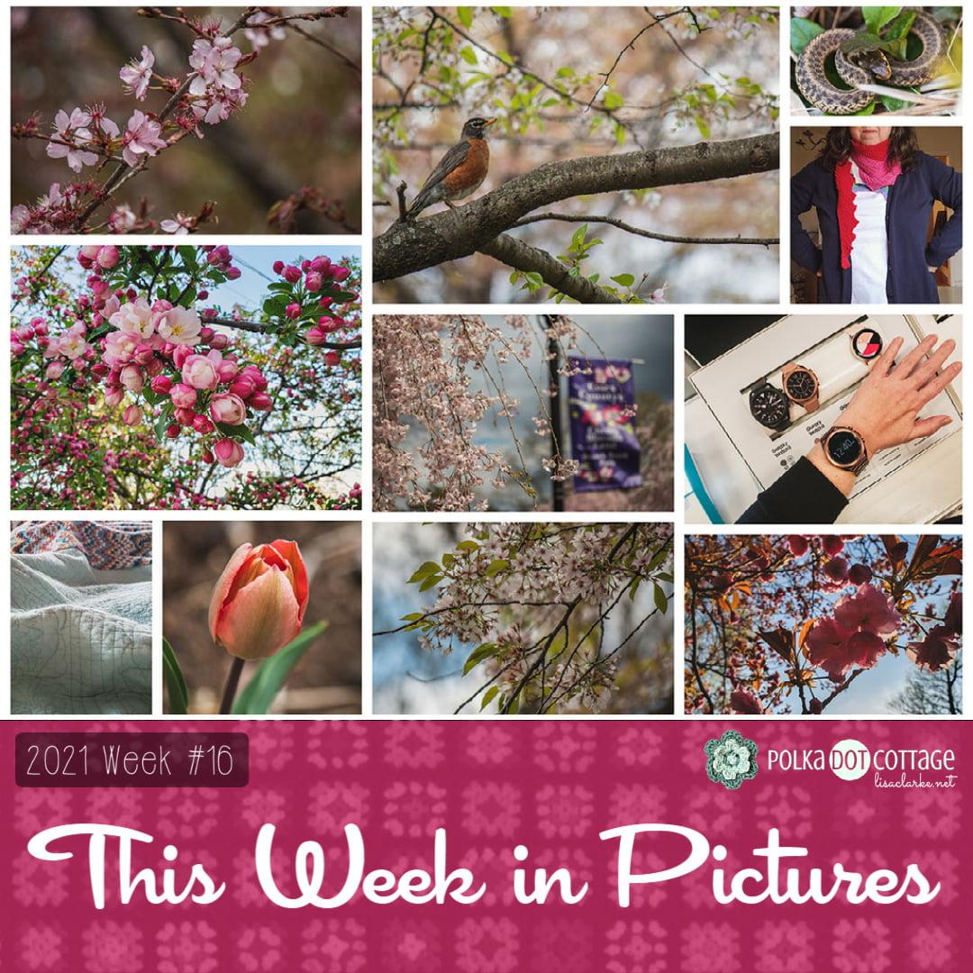 This Week in Pictures, Week 16, 2021
