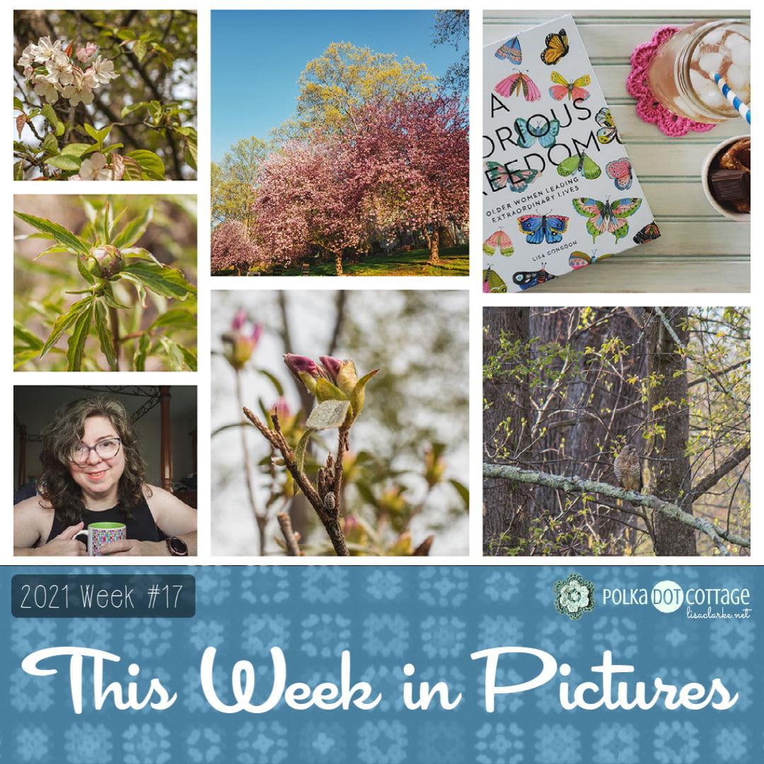 This Week in Pictures, Week 17, 2021