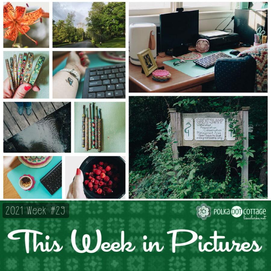 This Week in Pictures, Week 29, 2021